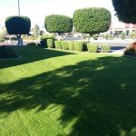 Lawn and Tree Care - Victor's Landscaping