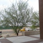 Commercial Tree Care Services from Victor's Landscaping