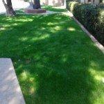 Grass Walkway Area